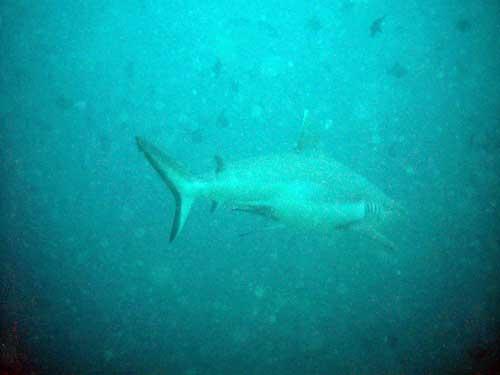 Подводная охота в сердце индийского