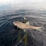 Dmitry_Vasilkov_Volga_spearfishing_1