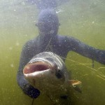 Dmitry_Vasilkov_Volga_spearfishing_18