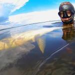 Dmitry_Vasilkov_Volga_spearfishing_8