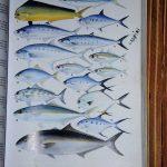Boris_Nizov_spearfishing_Bali_roompons_153