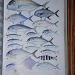 Boris_Nizov_spearfishing_Bali_roompons_154