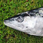 Boris_Nizov_spearfishing_Bali_roompons_158