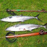 Boris_Nizov_spearfishing_Bali_roompons_162