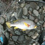 Boris_Nizov_spearfishing_Bali_roompons_204
