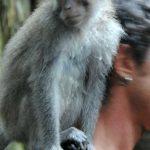 Boris_Nizov_spearfishing_Bali_roompons_261