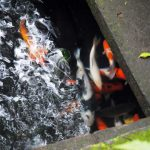 Boris_Nizov_spearfishing_Bali_roompons_262