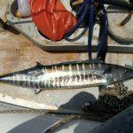 Boris_Nizov_spearfishing_Bali_roompons_271