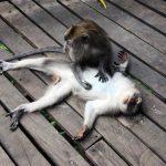 Boris_Nizov_spearfishing_Bali_roompons_273