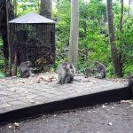 Boris_Nizov_spearfishing_Bali_roompons_274