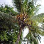 Boris_Nizov_spearfishing_Bali_roompons_297