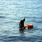 Boris_Nizov_spearfishing_Bali_roompons_301