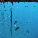 Boris_Nizov_spearfishing_Bali_roompons_304
