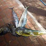 Boris_Nizov_spearfishing_Bali_roompons_77