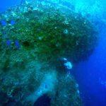 Boris_Nizov_spearfishing_Bali_roompons_93