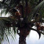 Boris_Nizov_spearfishing_Bali_roompons_96