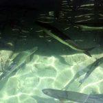 Podvodnaya_ohota_na_Cuba_11