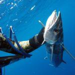 Podvodnaya_ohota_na_Cuba_33