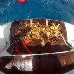 Podvodnaya_ohota_na_Cuba_36