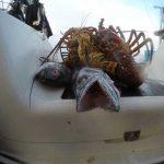 Podvodnaya_ohota_na_Cuba_47