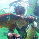 mikhail_novikov_dominicana_spearfishing_9